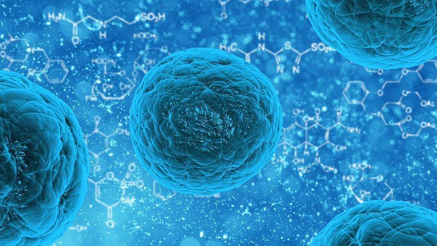 economia del conocimiento bioinformatica