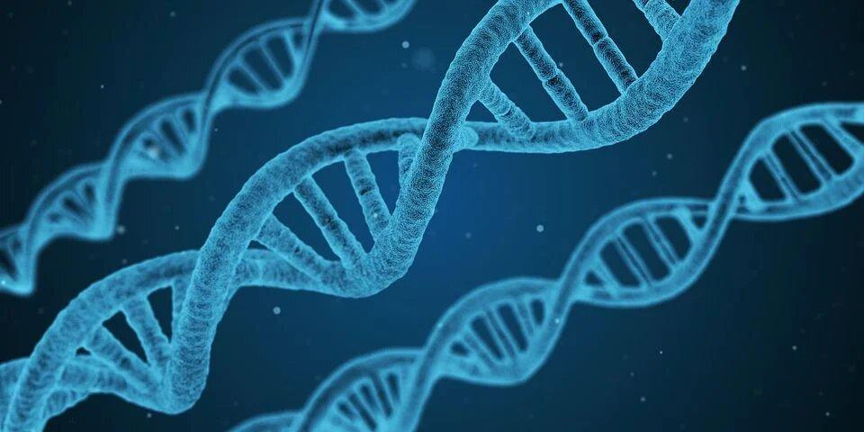 economia del conocimiento ingenieria genetica